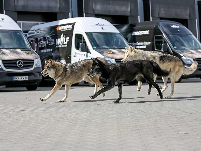 Reifencenter-Wolf-Liefergebiet